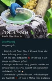 Reptilien WhatsApp Gruppe