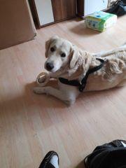 goldy sucht ein neues Körbchen