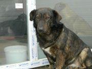 Tierschutz Dringend Zuhause gesucht