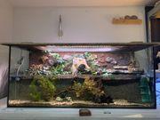 Aquaterrarium Paludarium Terrarium Aquarium