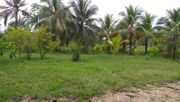 Brasilien 25 HA grosses Grundstück