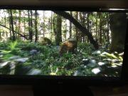 Fernseher LG 50 Zoll Top