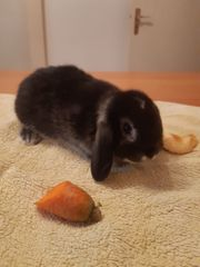 Kaninchenbabys suchen ein neues Zuhause
