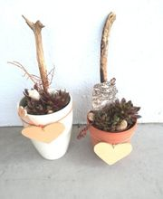 Töpfe bepflanzt winterhart