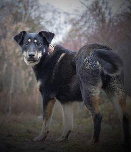 VENA - liebt uns Menschen ist: Kleinanzeigen aus Rabenau - Rubrik Hunde
