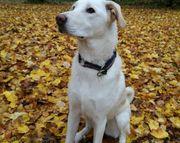Traumhund Kaley sucht ein neues
