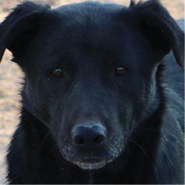 Hunde - Kenzo geb 03 2014 lebt