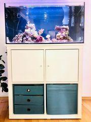 Meerwasseraquarium komplett 80x35x40 mit viel