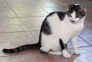 verschmuste junge Katze Peppels sucht