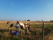 Pferdbox frei