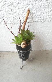 Töpfe mit Pflanzen