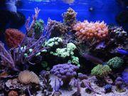 Meerwasseraquarium 160 Liter