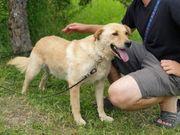 MACIK - eine Seele von Hund