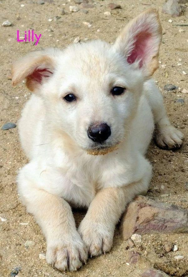 Pflegestelle für unsere Hunde gesucht
