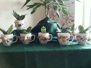 Bogenhanf - Zimmerpflanze mit ohne Übertasse