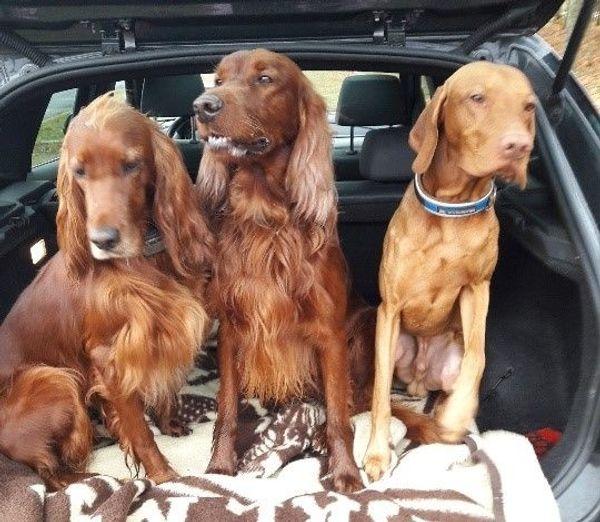 Liebevolle Hundebetreuung Katzenpension Hundepension Tierbetreuung