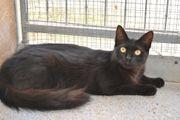BRENDA - Freundliches Katzenkind sucht Familie