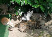 2 süße Kitten suchen ein