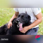James - Lebensfrohe Wasserratte sucht liebevolles