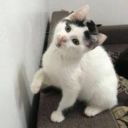 Kätzchen Yuna möchte zu Dir