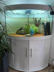 Eckaquarium mit Moschusschildkröten zu verkaufen