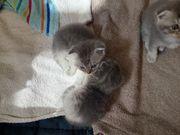 süße Katzenkitten abzugeben