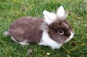 Kaninchen Damen verschiedenen Alters suchen