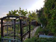 Garten mit Haus und Pacht