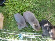 Niedliche Kaninchen