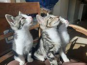 Katzenkinder suchen liebevolles Zuhause auf