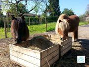KInder Ponys immer ein große