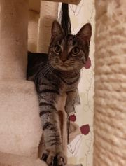 Katze Mariette 7 Monate geimpft