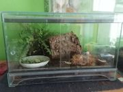 Kleines Terrarium mit Achatina Schnecken