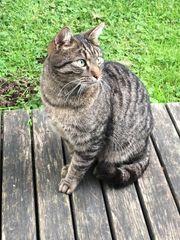 Katze in Weiler zugelaufen