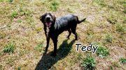 Wollen Sie Tedy s Traumfamilie
