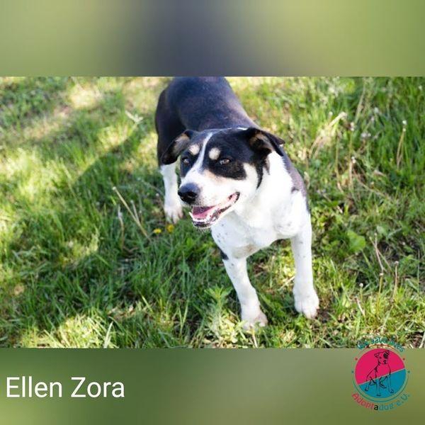 Ellen Zora - Diese Hündin will