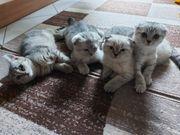 Zuckersüße Kitten beriet für die
