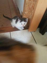 2 süsse Katzenbabys