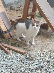 Katzenmädchen Eliza sucht ein Zuhause