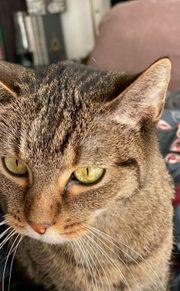 liebe Katze 7 Jahre von