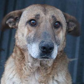 Fili Mou, geb. ca. 07/2016, lebt in GRIECHENLAND, im städt. Tierheim Serres