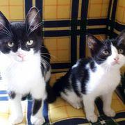 Kätzchen Pandeshi und Susi sind