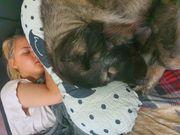 Süße Schäferhund Dame