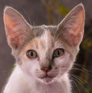 Lola ein bezauberndes Katzenkind