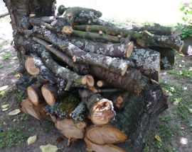 Bild 4 - Holz vom Kirschbaum Kirschbaumholz - Bobenheim
