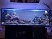 150x50x50 Meerwasser