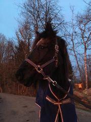 Hof - Nachmittag mit den Ponys