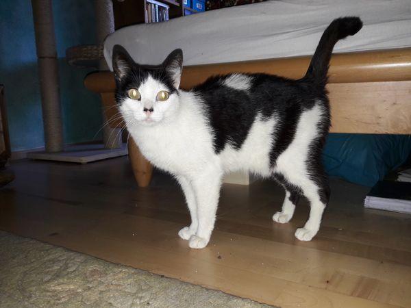 Katze Agata vermisst