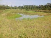 Brasilien 1000 Ha grosses Tiefpreis-Grundstück