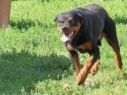 Toller Familienhund sucht liebe Menschen